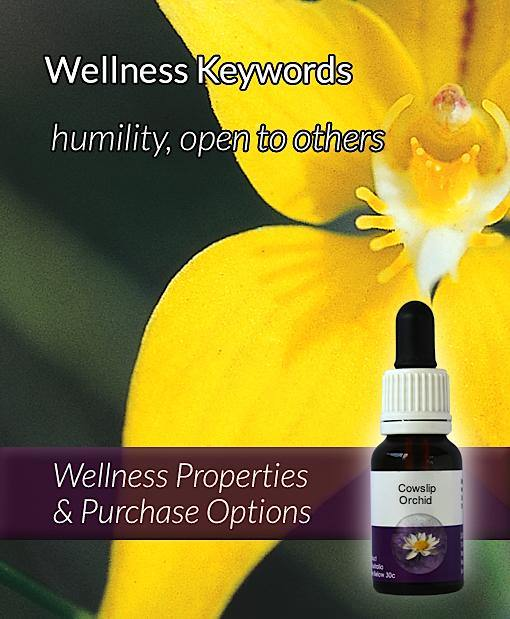 Cowslip Orchid Flower Essence