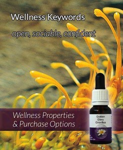 Golden-Glory-Grevillea-Flower-Essences