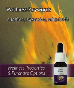 Golden-Waitsia-Flower-Essences