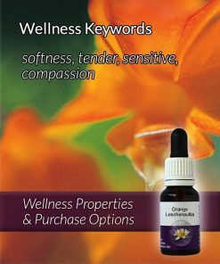 Orange-Leschenaultia-Flower-Essences