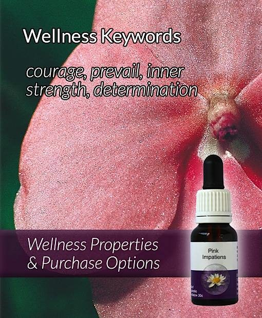 Pink-Impatiens-Flower-Essences