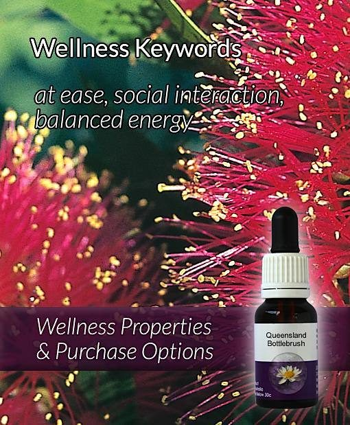 Queensland-Bottlebrush-Flower-Essences