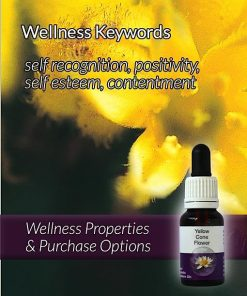 Yellow-Cone-Flower-Flower-Essences